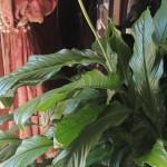 il-primo-fiore-in-casa-mia